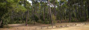 Camping La buzelière - forêt de pins Saint Jean de Monts